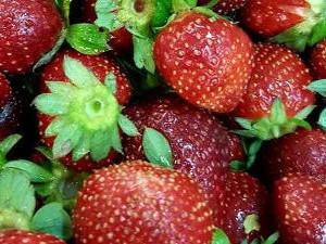 B&B Fiore - Fresh strawberries at Cooperativa Sapore di Sole